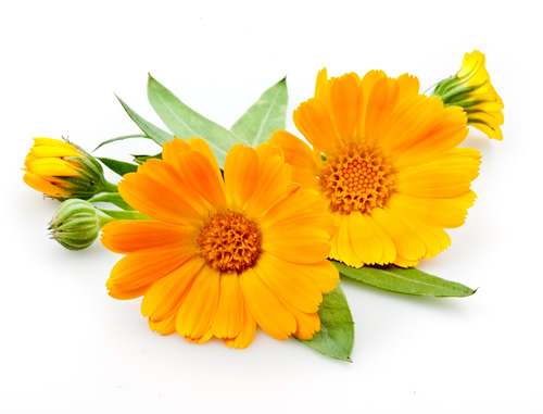 Health Benfits of Calendula Flower