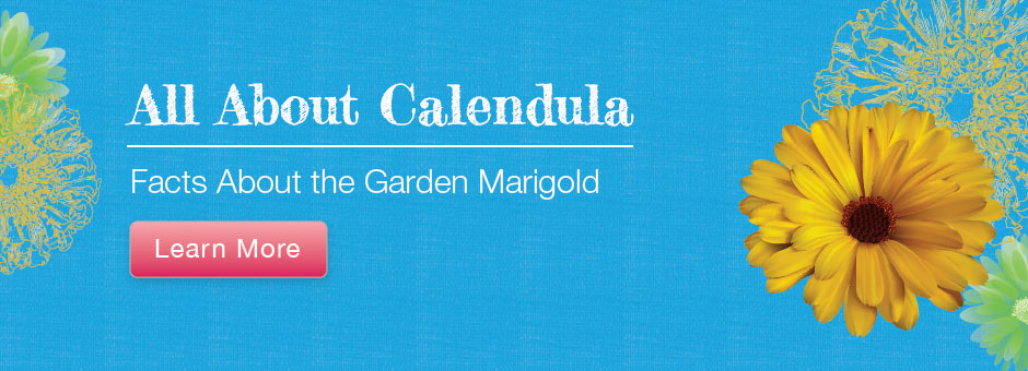 All About Calendula- Facts about the garden marigold